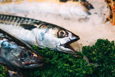 Pesce abbattuto e congelato: le differenze per i ristoratori